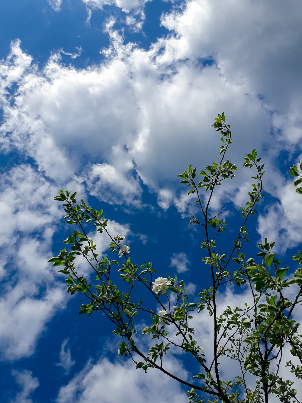 green leaves under blue sky and white clouds during daytime