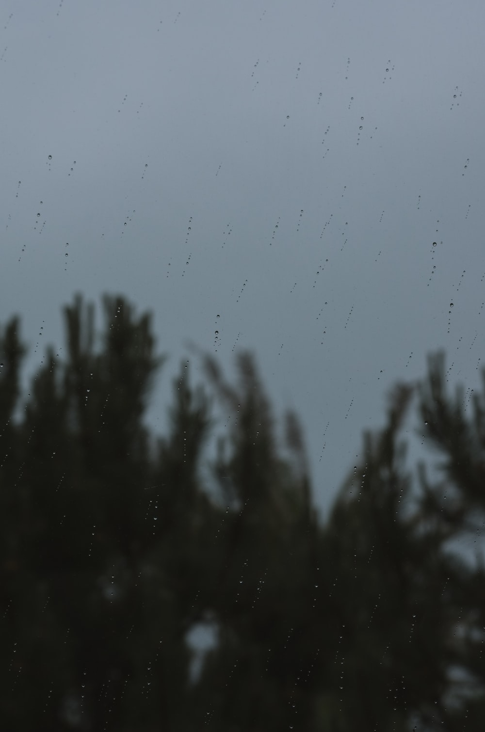 green pine tree under gray sky