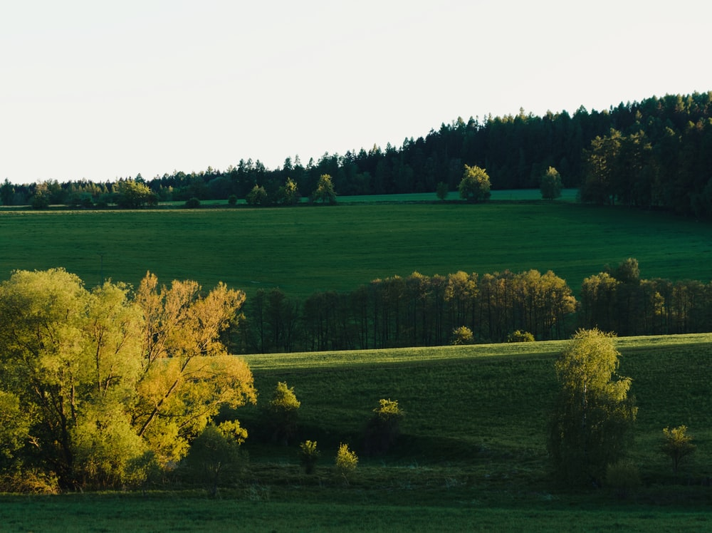yellow leaf trees on green grass field during daytime