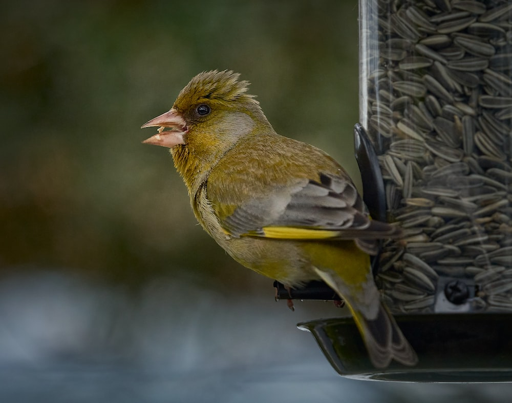 yellow and brown bird on tree branch