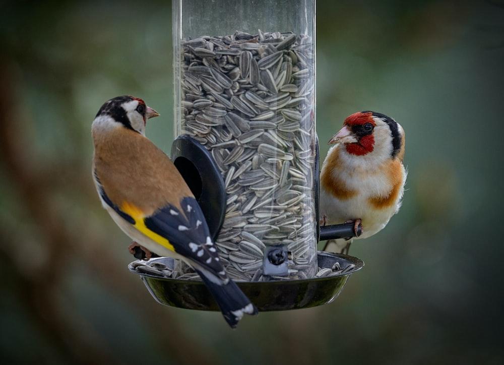yellow and black bird on gray bird feeder