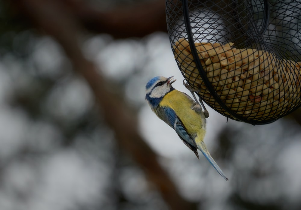 yellow and blue bird on brown and black bird feeder