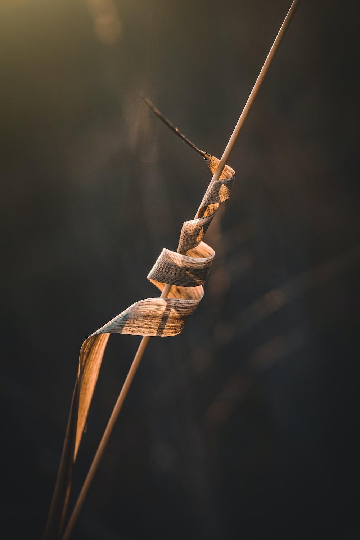 brown rope tied on brown rope