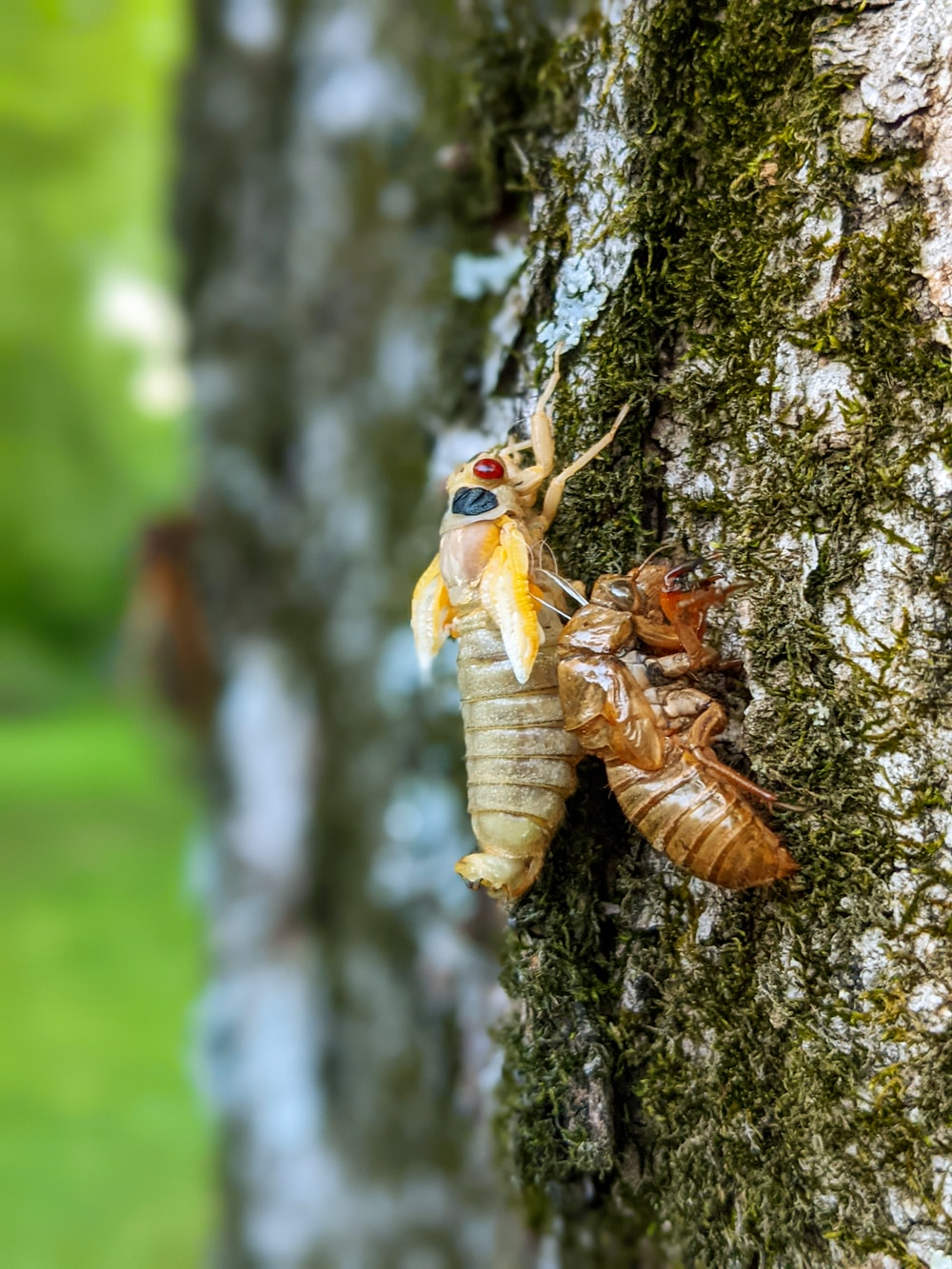 brown and white insect on brown tree trunk