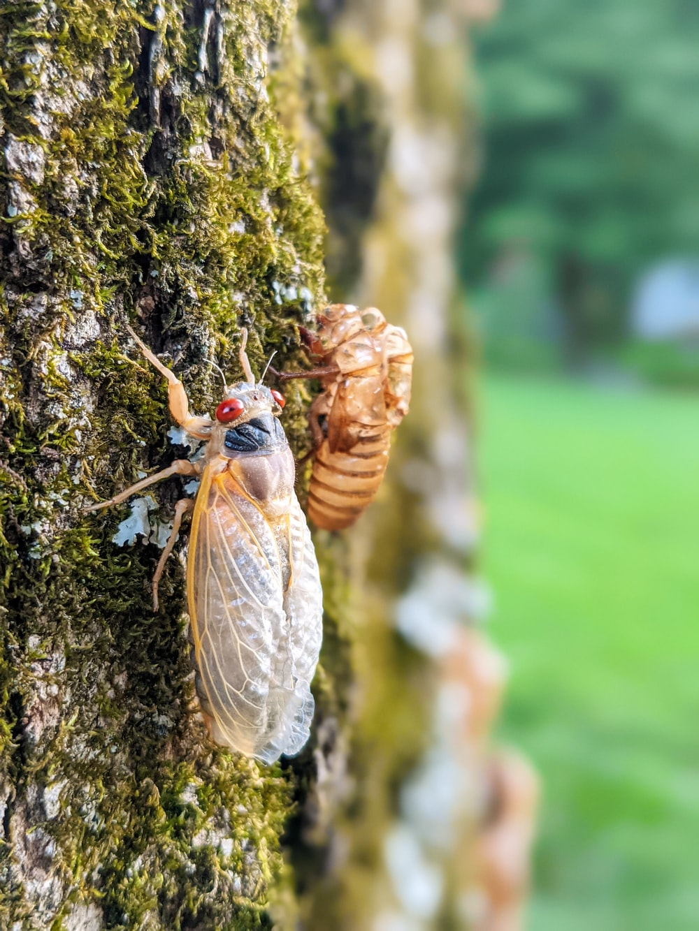 brown and gray moth on brown tree trunk during daytime