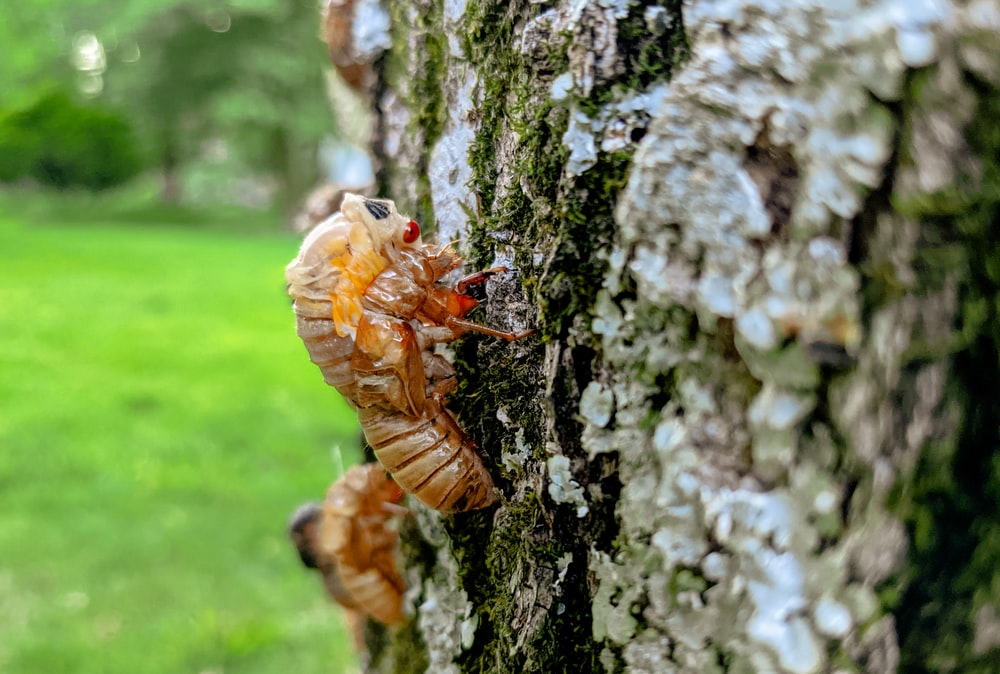 brown ant on brown tree trunk during daytime