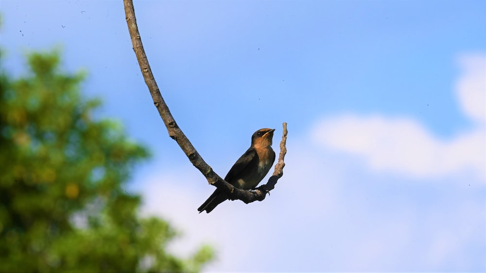 brown and black bird on tree branch during daytime