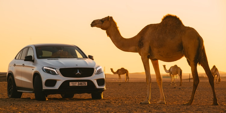 camel on white car during daytime
