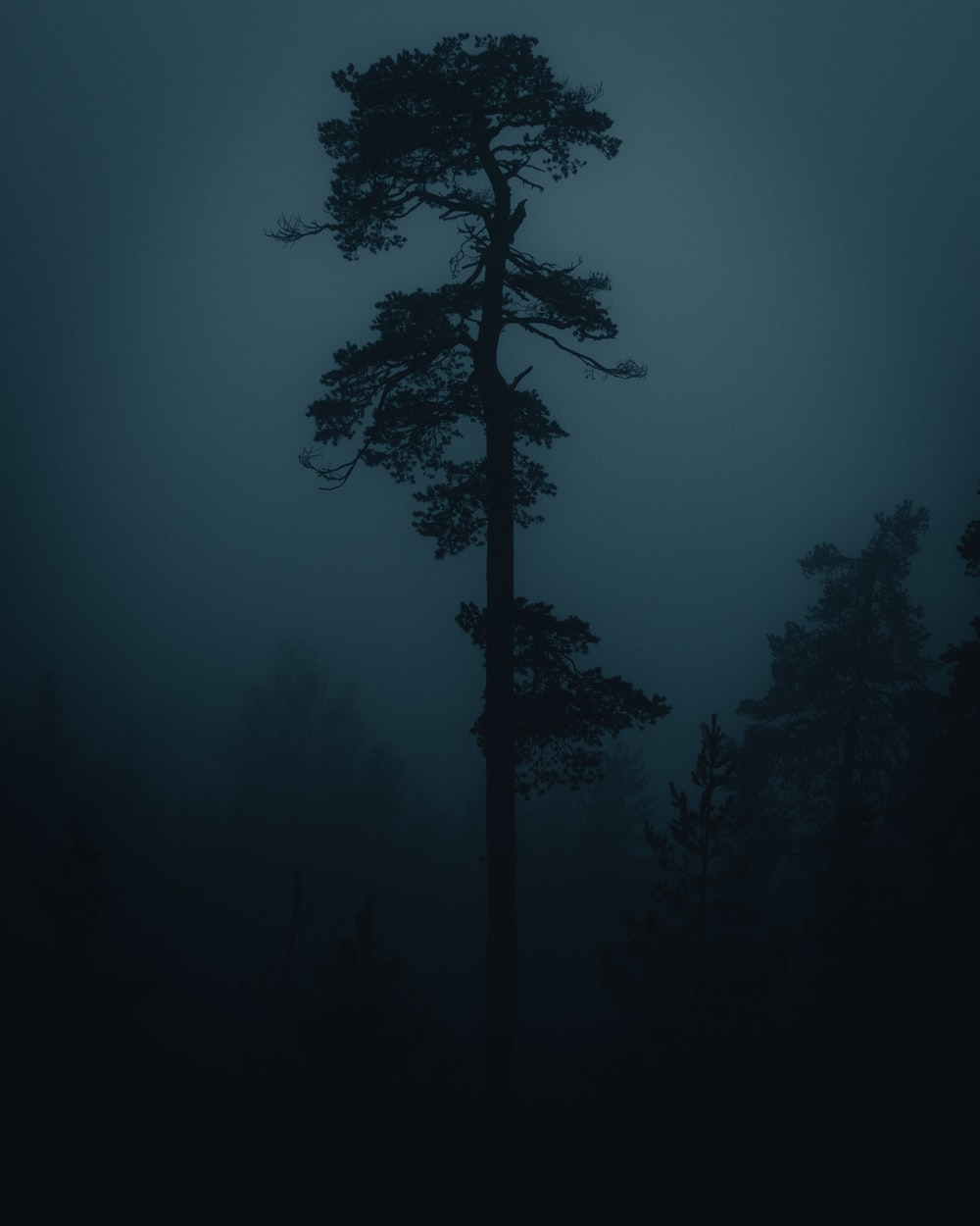 silhouette of tree during night time