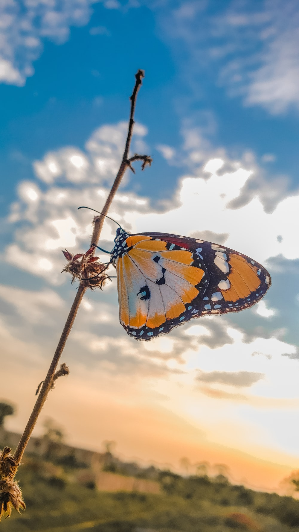 brown and black butterfly on brown tree branch under white clouds during daytime