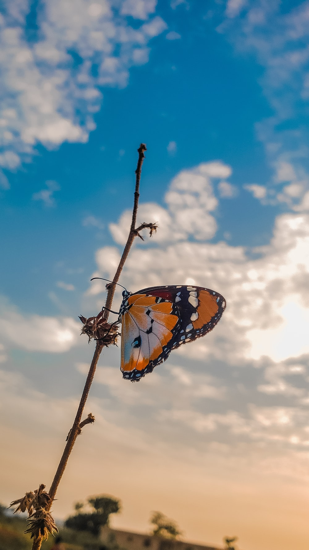brown and black butterfly on brown stem under blue and white cloudy sky during daytime