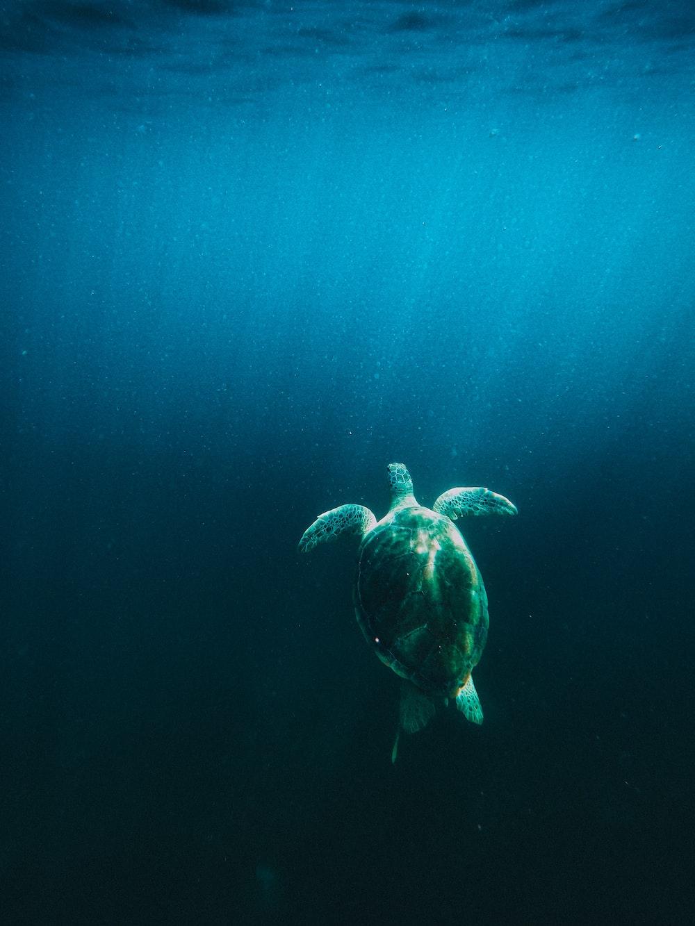sea turtle under blue sky