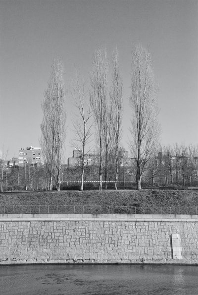 trees on the river bank of a city, black and white