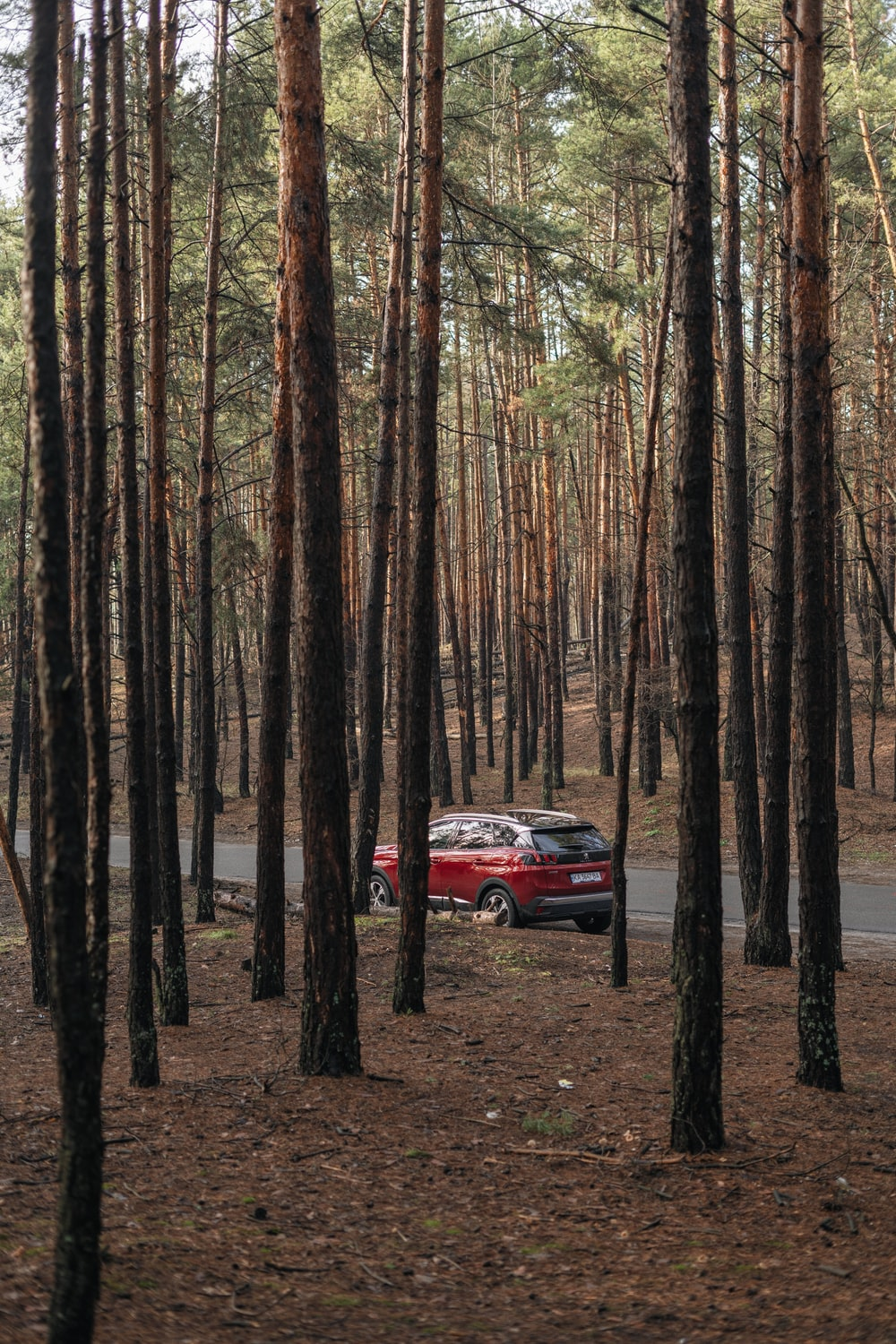 red car in the middle of the forest during daytime