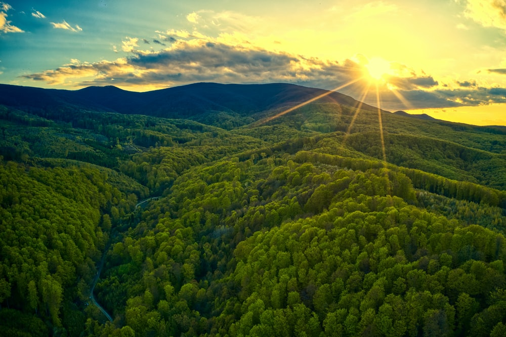 green trees on mountain under blue sky during daytime