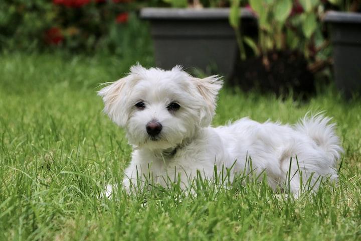 A Dog Named Sherlock