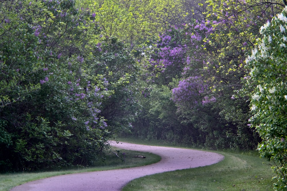 green trees beside gray road