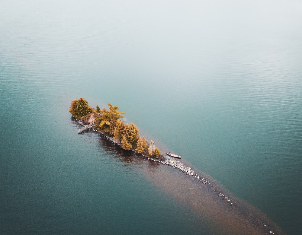 green trees on island surrounded by water during daytime