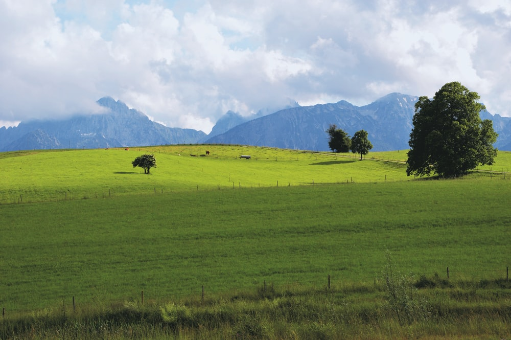 green grass field with trees and mountains in distance