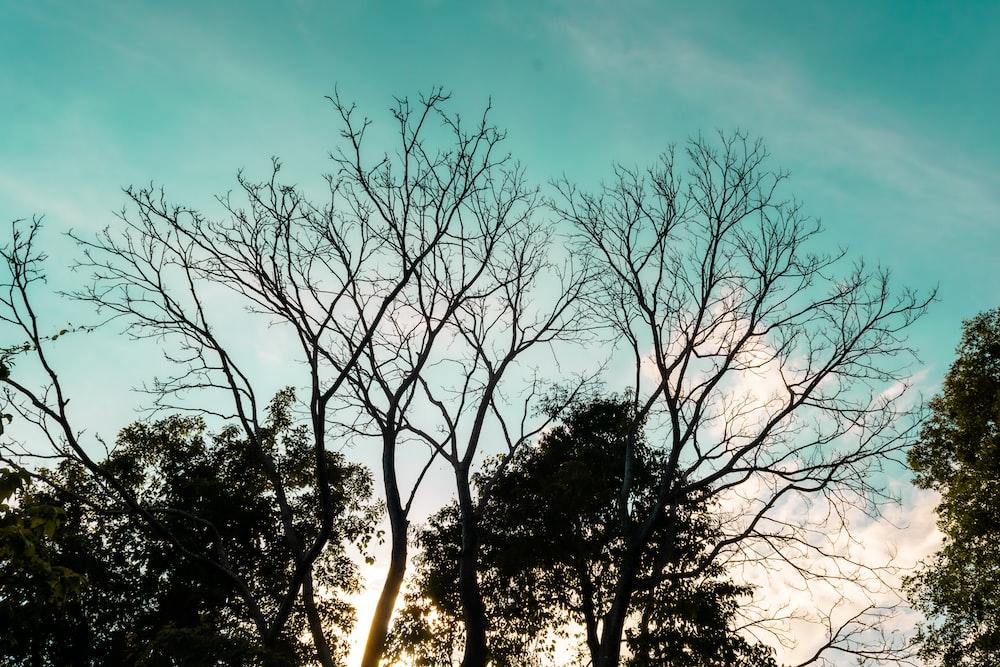 leafless trees under blue sky during daytime