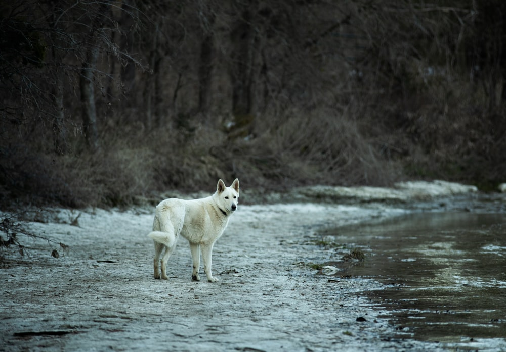 white wolf running on snow covered ground during daytime