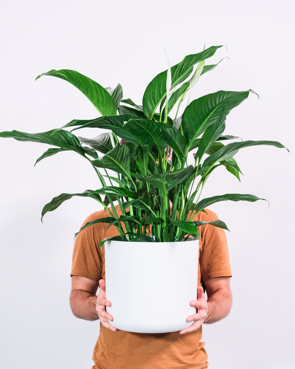 person holding green plant in white pot