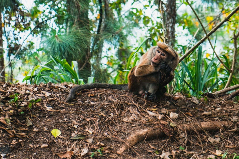 brown monkey sitting on ground surrounded by trees during daytime