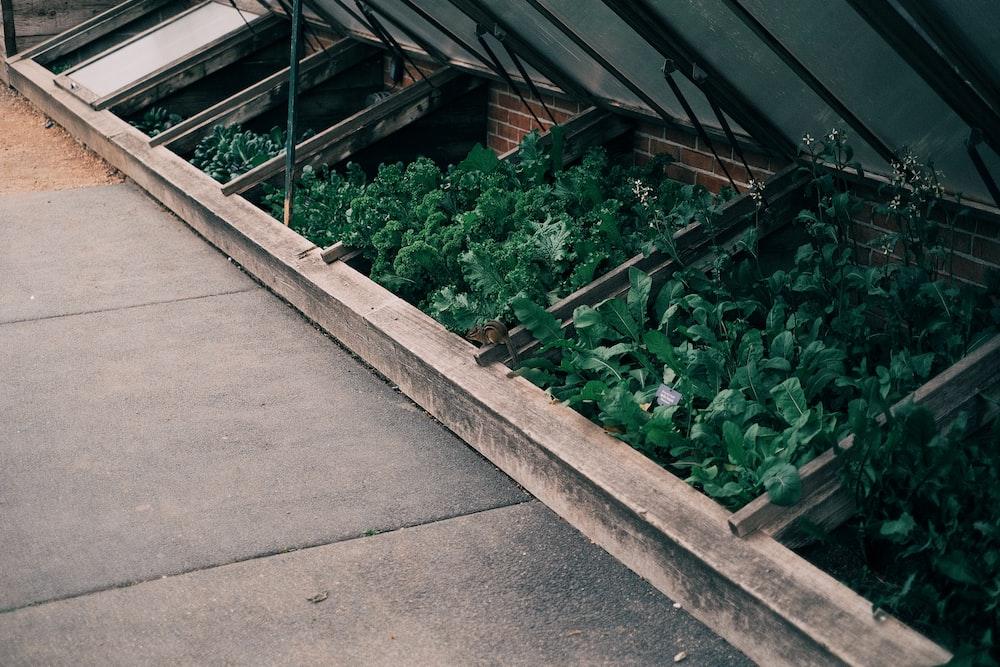 green plants on green metal frame
