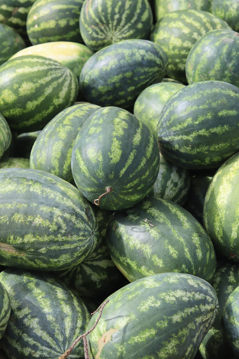 green and yellow watermelon fruit