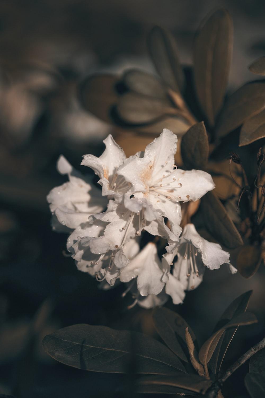 white flower in tilt shift lens