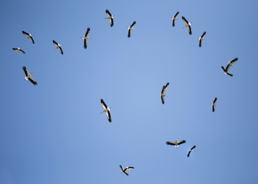 low angle photography of flock of birds flying under blue sky during daytime