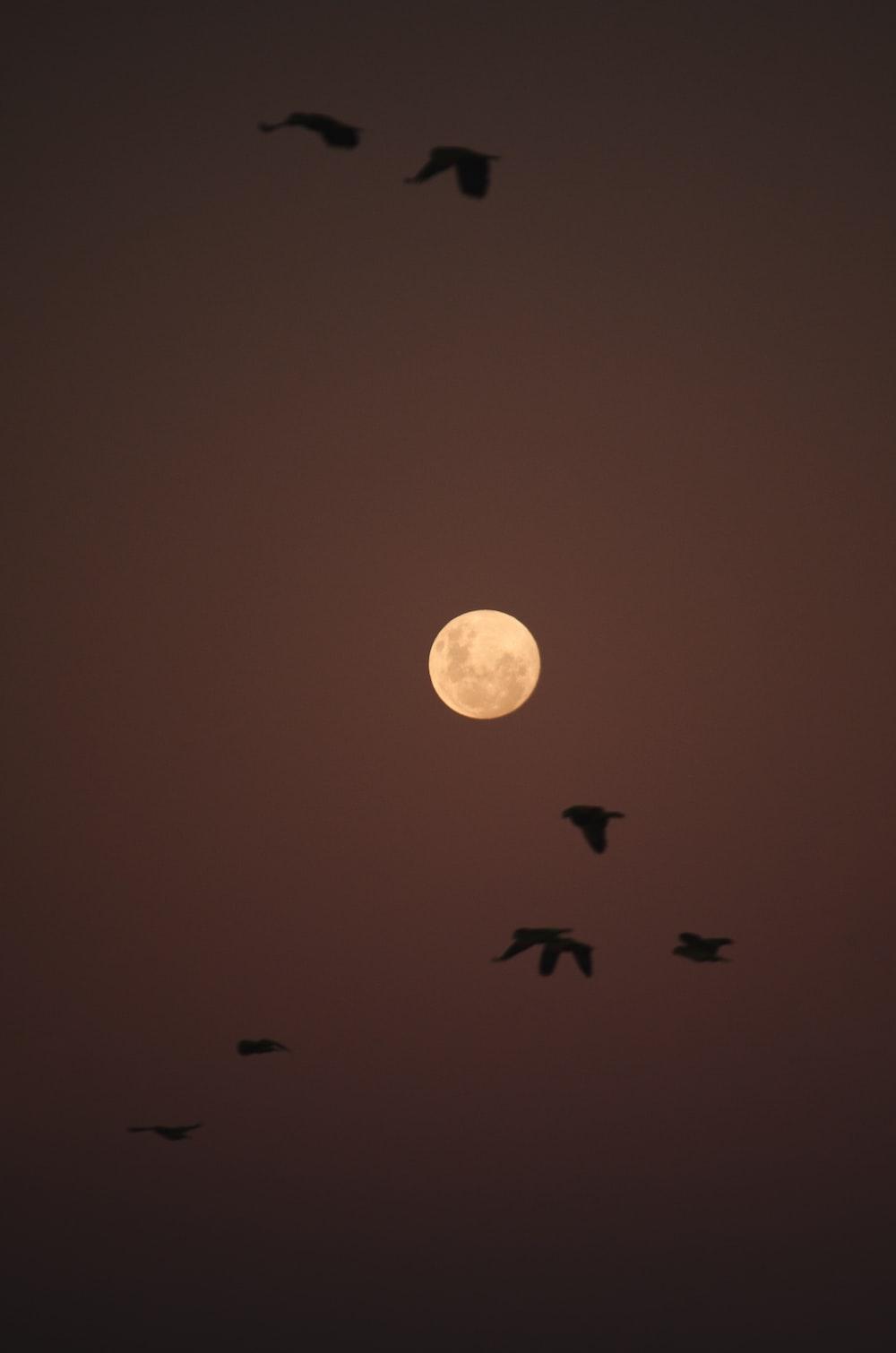 birds flying under full moon