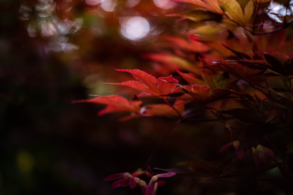 red and yellow leaves in tilt shift lens