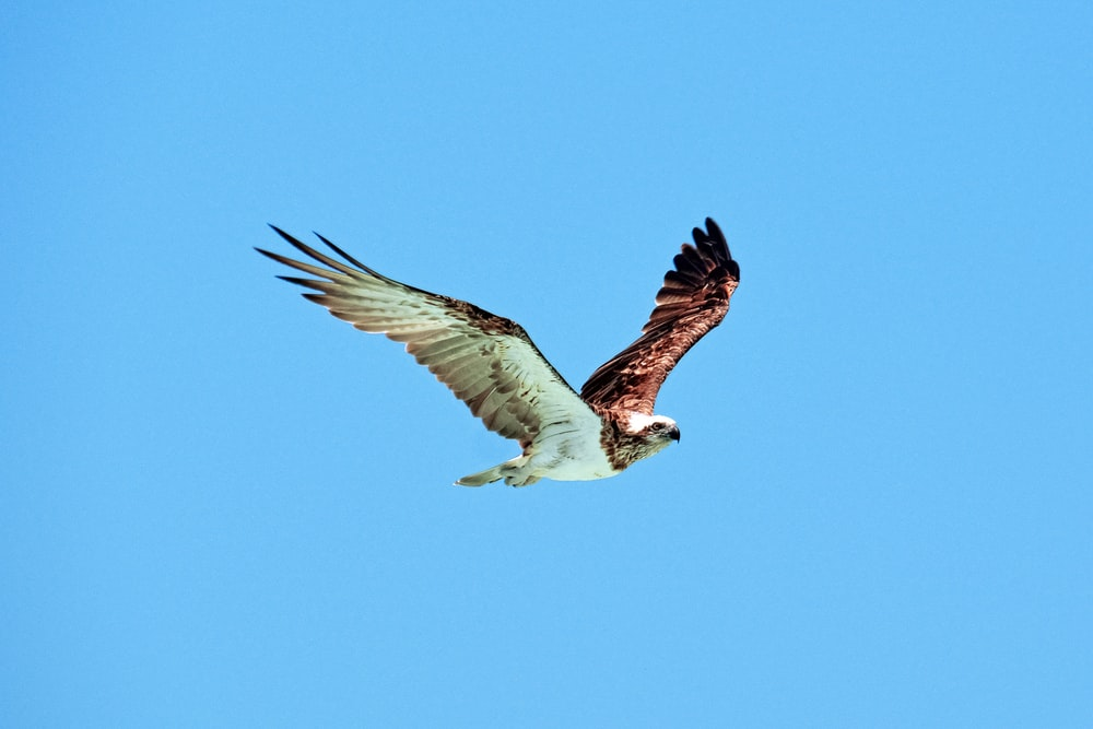 white and brown bird flying during daytime