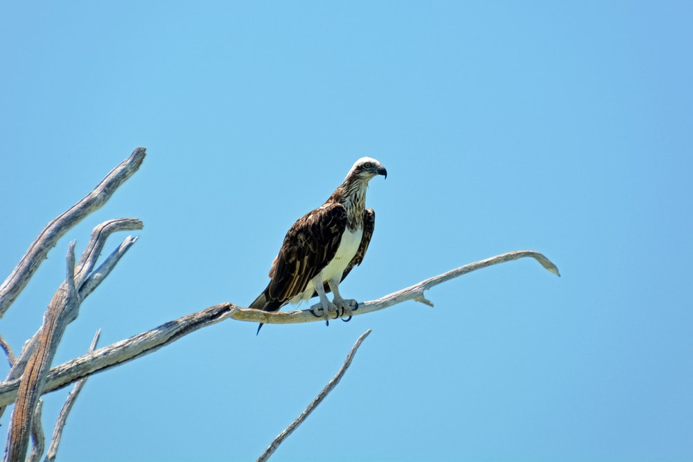 brown and white eagle on brown tree branch during daytime