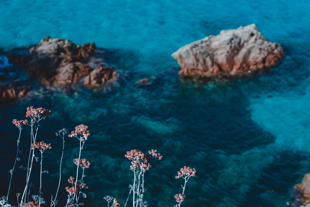 white flowers on brown rock formation in the middle of blue sea