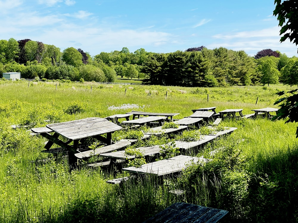 black wooden picnic tables on green grass field during daytime