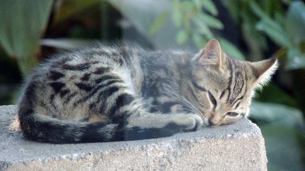 brown tabby cat lying on gray concrete surface