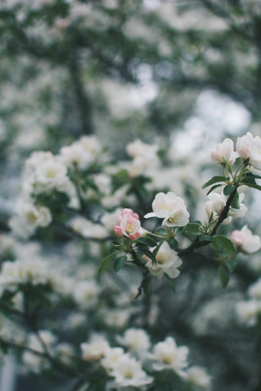 white and pink flowers in tilt shift lens