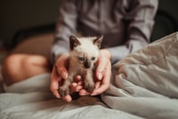 person holding white and brown kitten
