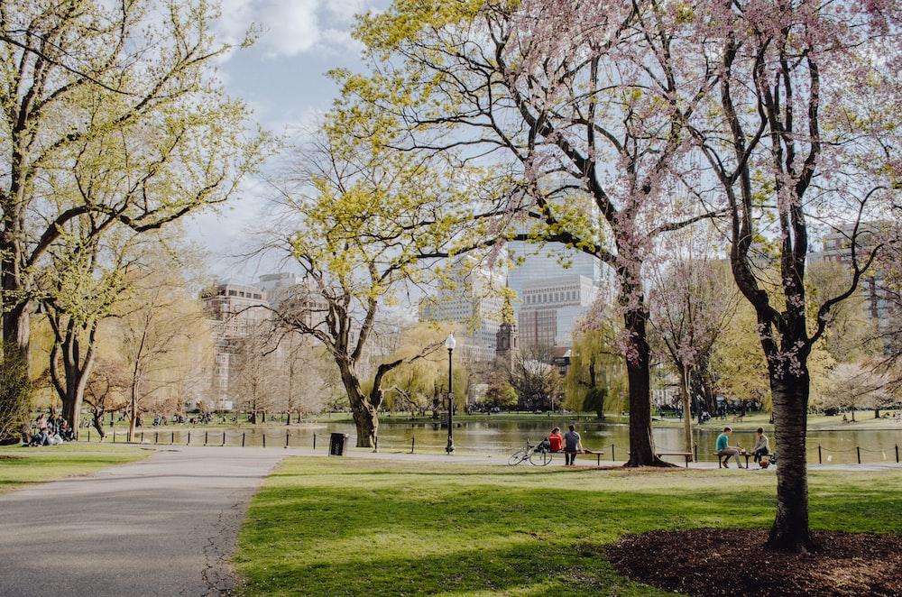 people walking on park during daytime
