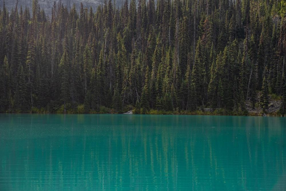 green lake near green trees during daytime