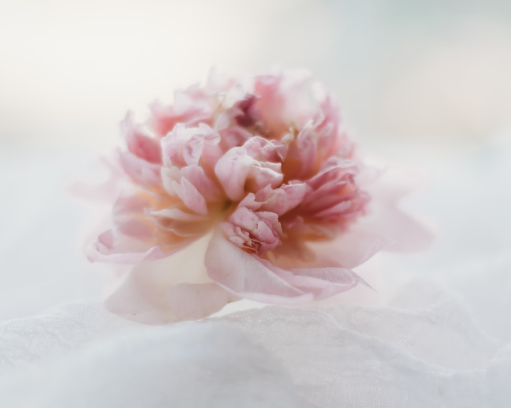 pink and white flower on white textile