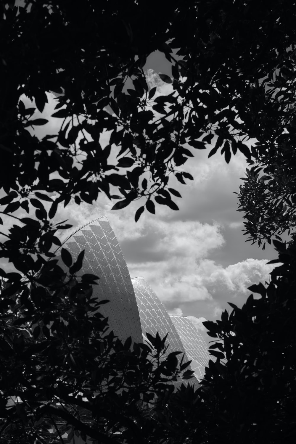 grayscale photo of trees near building