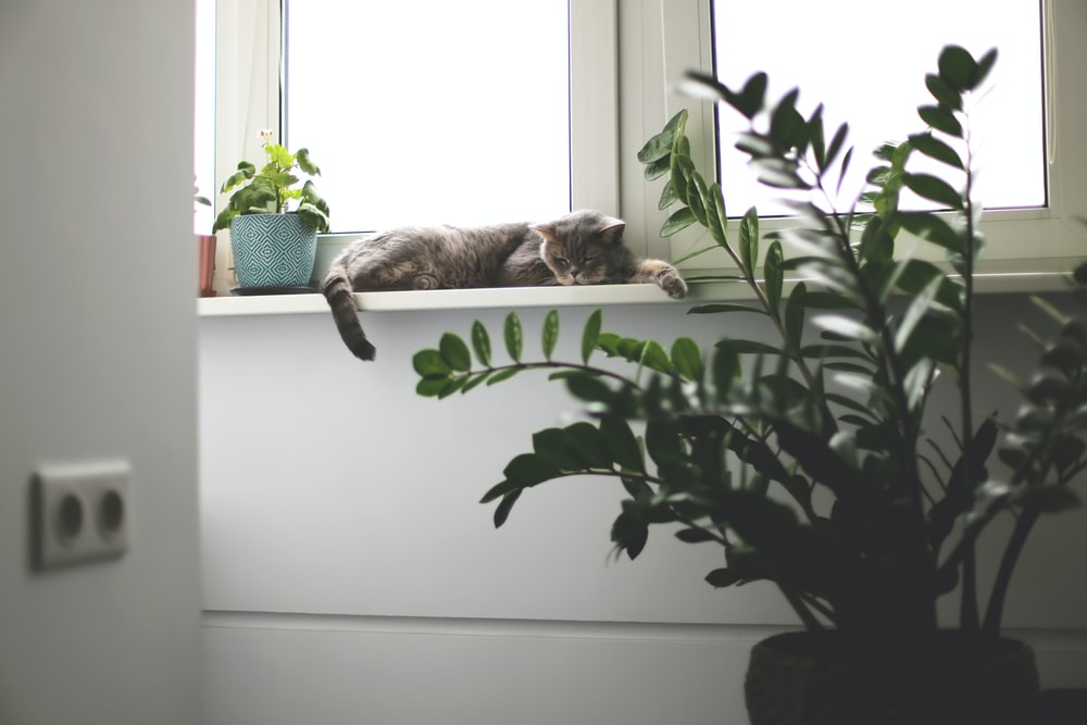 brown tabby cat lying on white wooden table