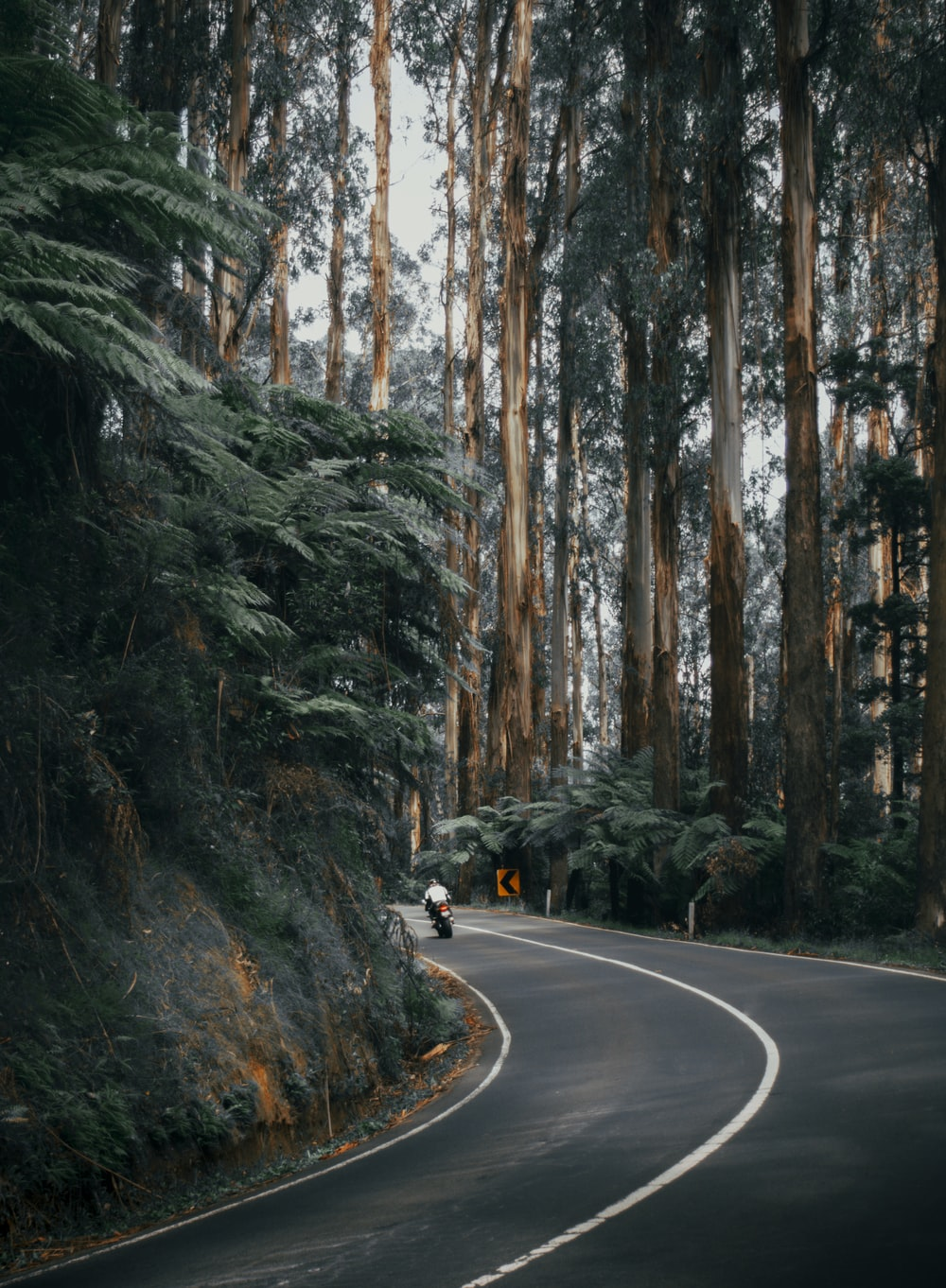 black car on road between trees during daytime