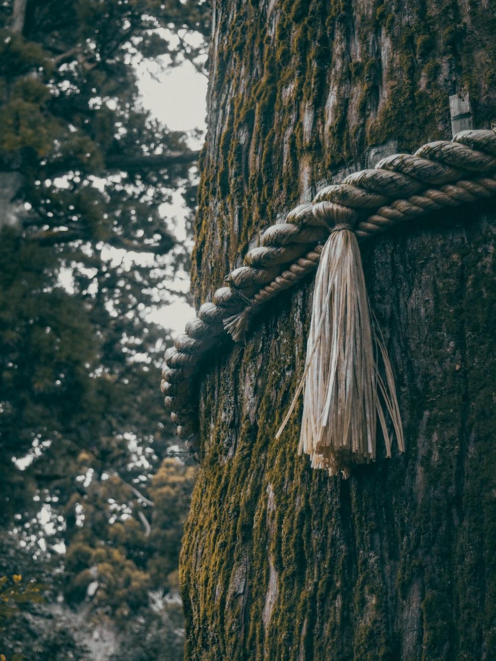 brown rope tied on brown tree trunk