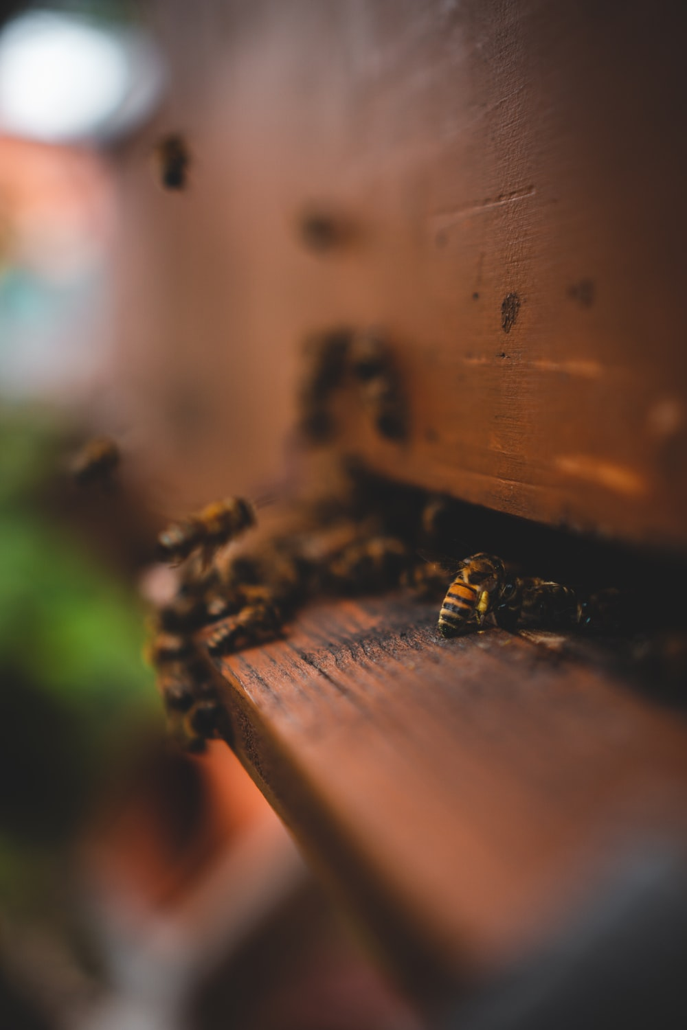 black and yellow bee on brown wooden plank