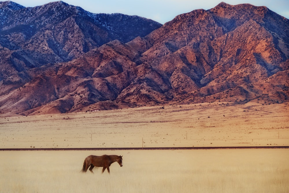 brown horse on brown field during daytime