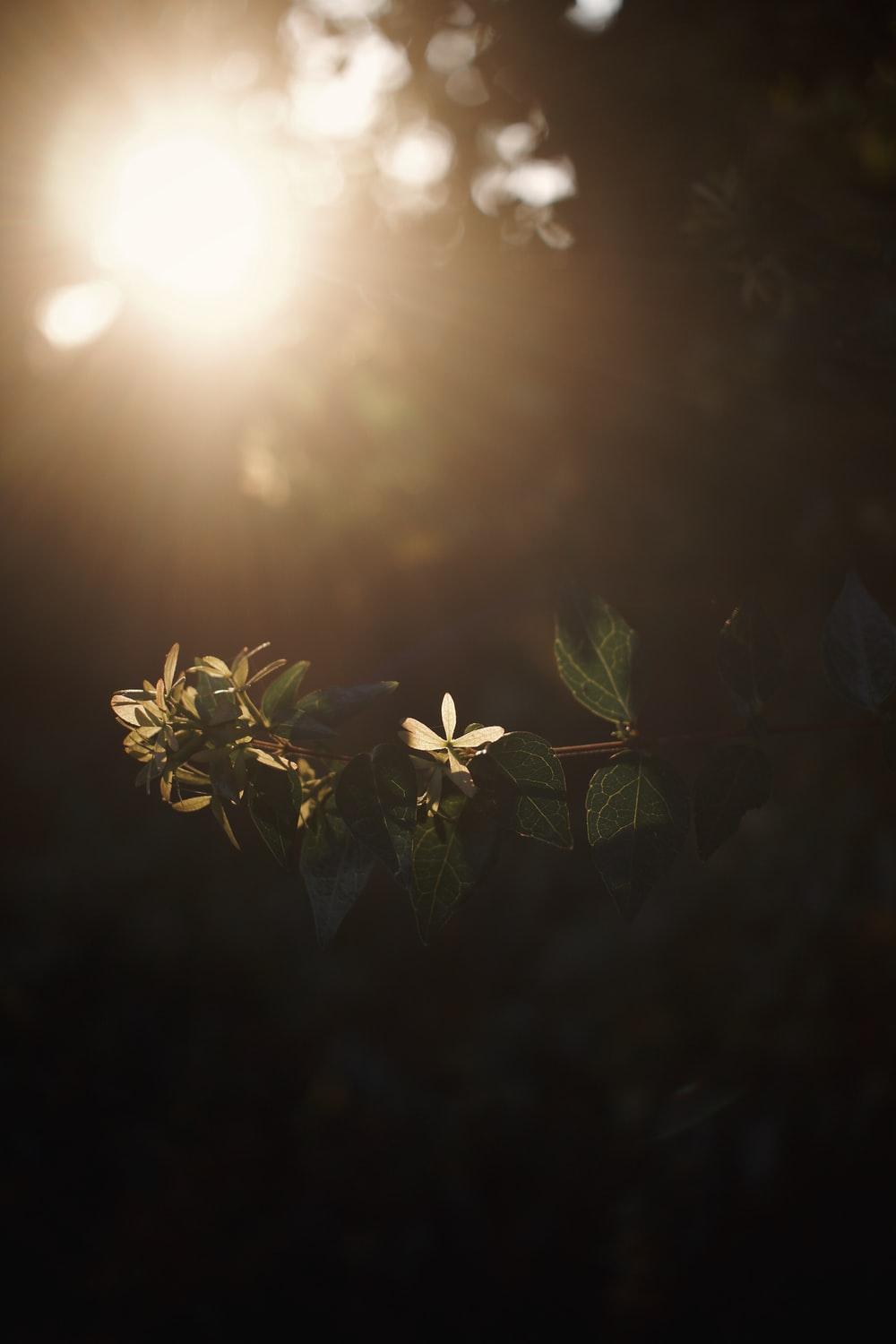 green plant with sun light